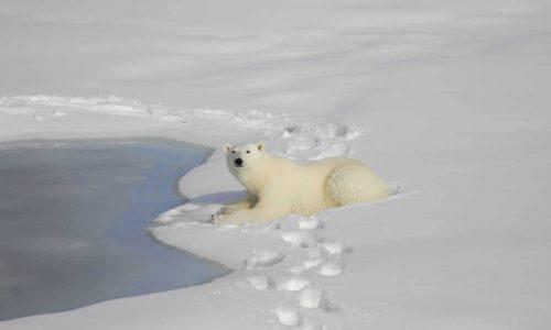 Cercle arctique slider home